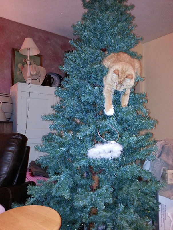 He Didn't Even Wait For The Ornaments