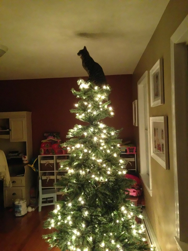 122 Cats Helping Decorate Christmas Trees Bored Panda