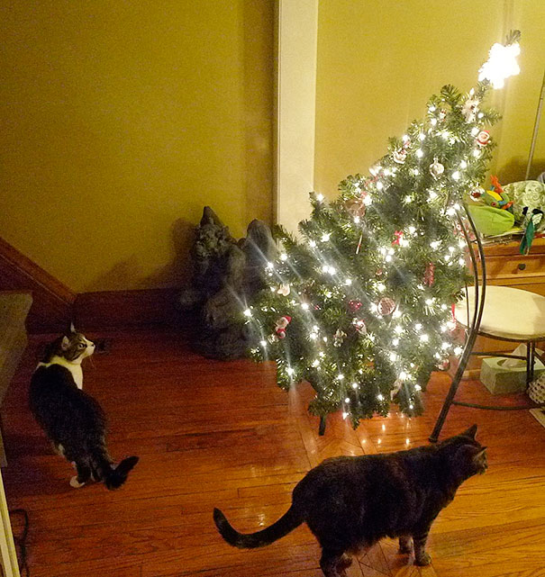 122 Cats Helping Decorate Christmas Trees