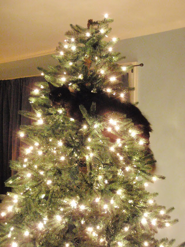 My Mom Sent Me Photos Of Her New Christmas Tree - That Cat Seems To Approve
