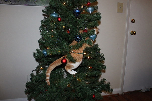 Set Up Christmas Tree And Came Back To This