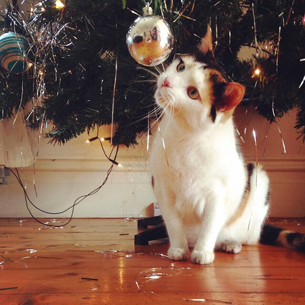My Housemate's Cat Is Curious About Christmas