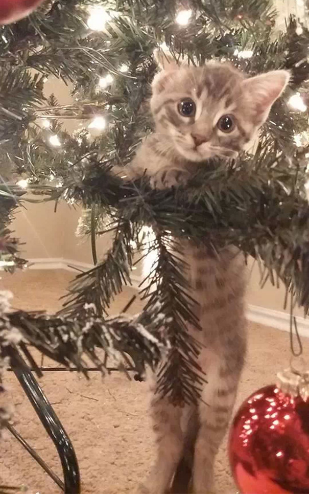 My Friend's Kitten Discovered The Christmas Tree