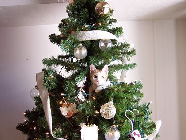 My Cat Is Decorating A Christmas Tree