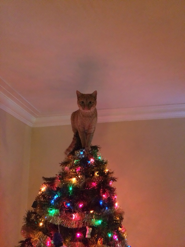 No Need To Put A Star On The Top Of The Tree Now