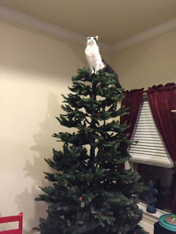 My Friend Just Sent Me A Picture Of Her Mom's Cat Looking All Majestic On The Top Of Their Christmas Tree