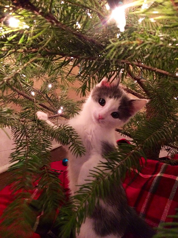 Not Sure About This Whole Tree Thing