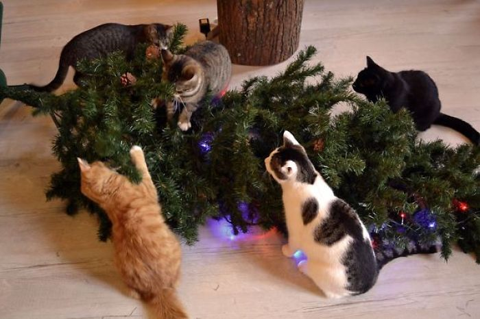 Christmas At A Cat Cafe