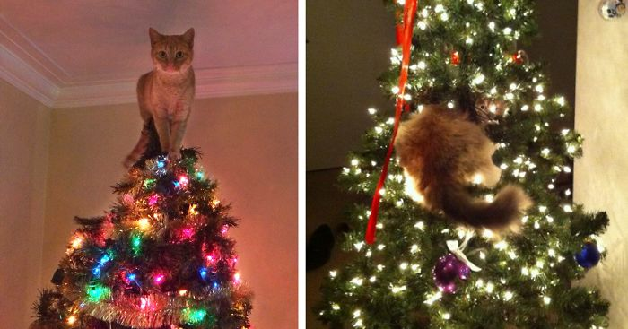 15 cats helping decorate christmas trees - Pictures Of Pretty Decorated Christmas Trees