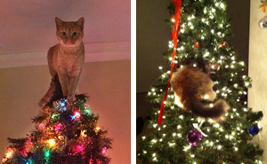 15+ Cats Helping Decorate Christmas Trees