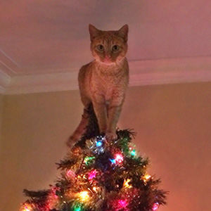bengal cat rescue michigan