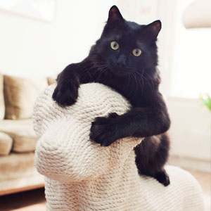 Dog-Shaped Scratching Post Lets Cats Have Their Sweet Revenge