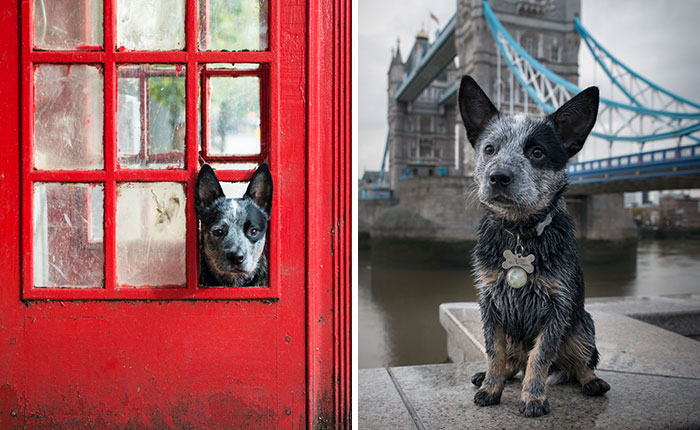 A Dog's Life In London