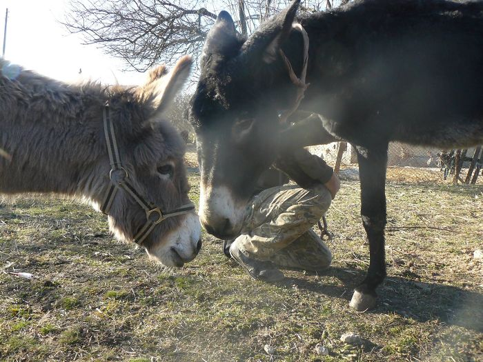 Donkey Duo Saved From Being Turned Into Sausages On Christmas