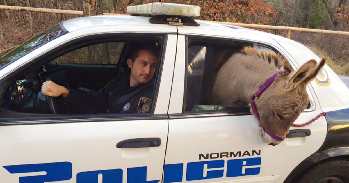 Cop Rescues Donkey From Getting Hit By Traffic, Donkey ...