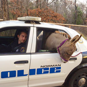 Cop Rescues Donkey From Getting Hit By Traffic, Donkey Thanks Him In A Way He Didn't Expect