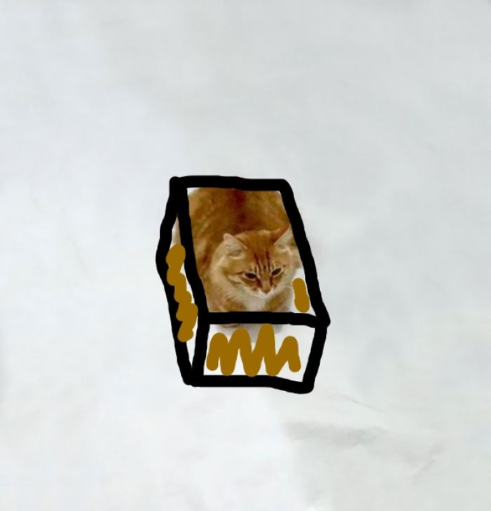 Cat In A Doodled Box