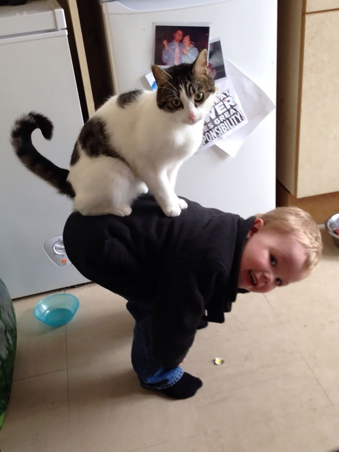 My Son And My Cat Have A Weird Relationship