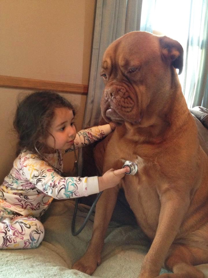 Little Girl Is Taking Care Of A Dog