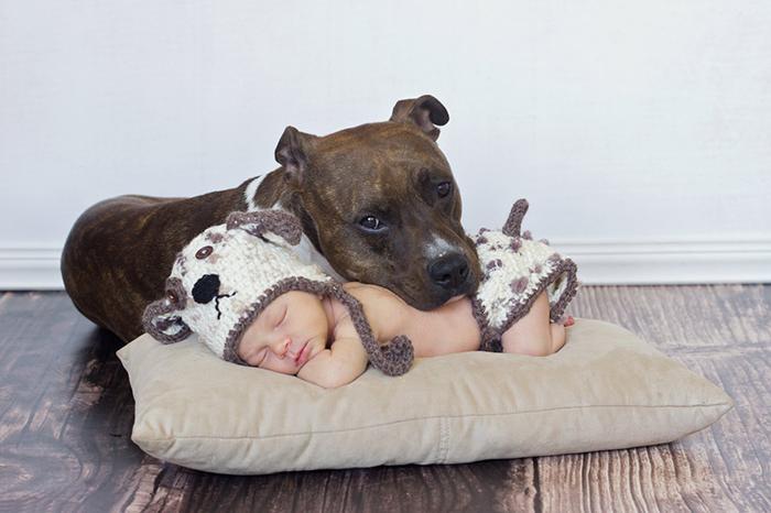Baby And Pitbull Puppy