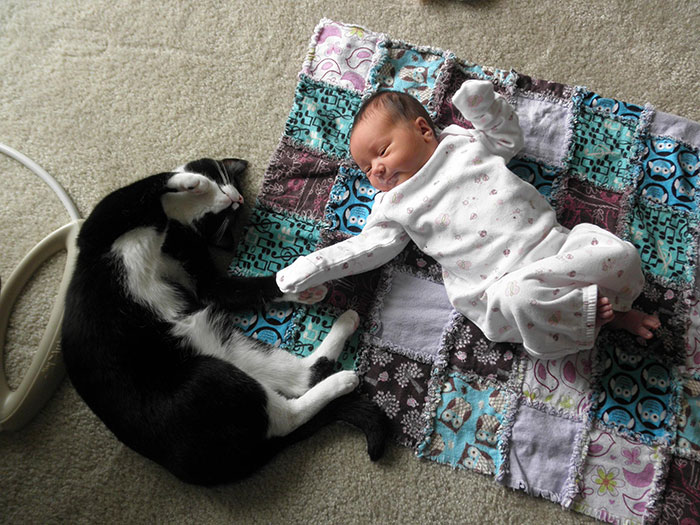 My Cat Plopped Down And Held Hands With My Newborn Baby Girl