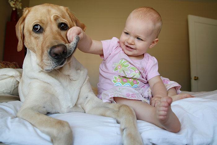 Patient Puppy