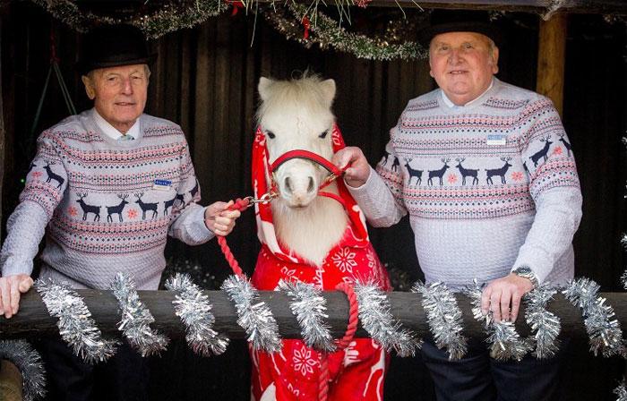foursie-onesie-shetland-pony-daffy-2