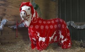 Foursie: New Festive Onesie For Ponies To Keep Them Warm