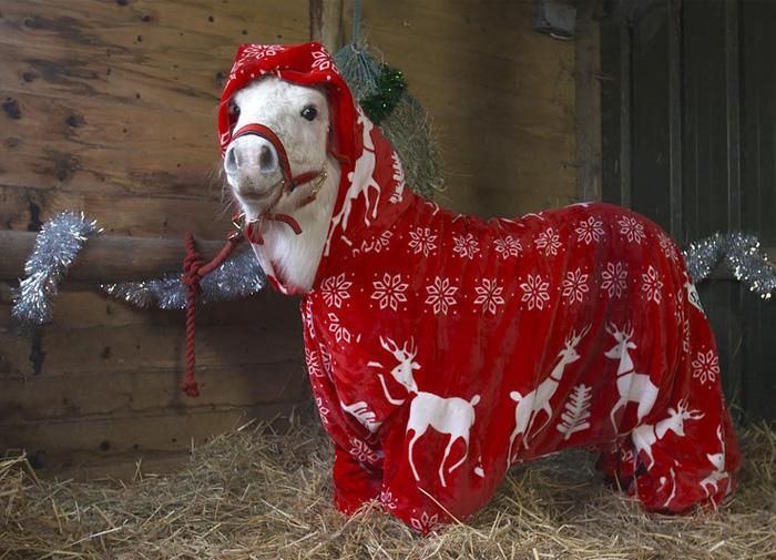 foursie-onesie-shetland-pony-daffy-3