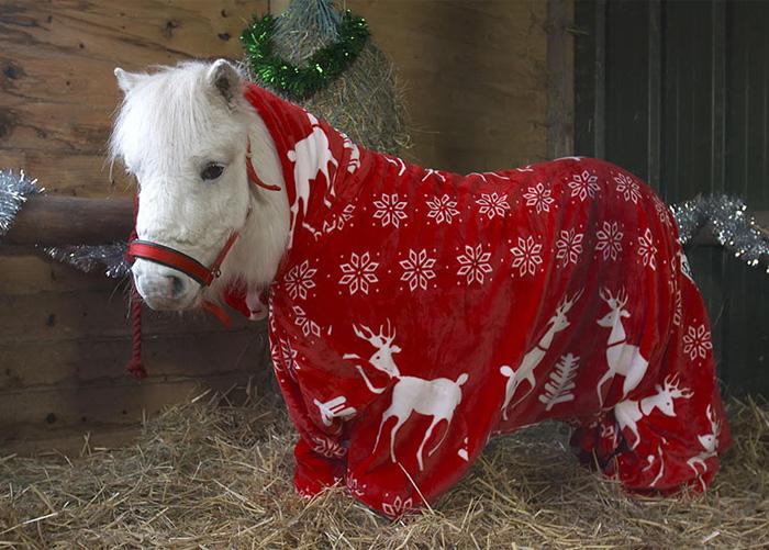 foursie-onesie-shetland-pony-daffy-4