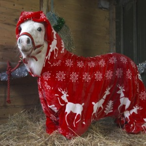 Foursie: New Festive Onesie For Ponies To Keep Them Warm