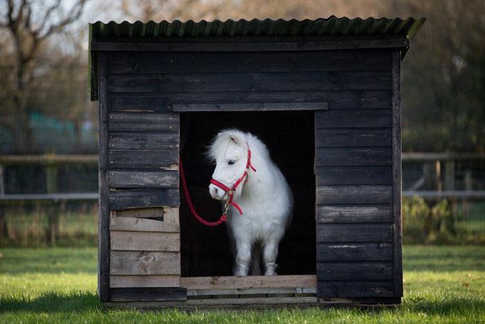 salopeta ponei daffy 4