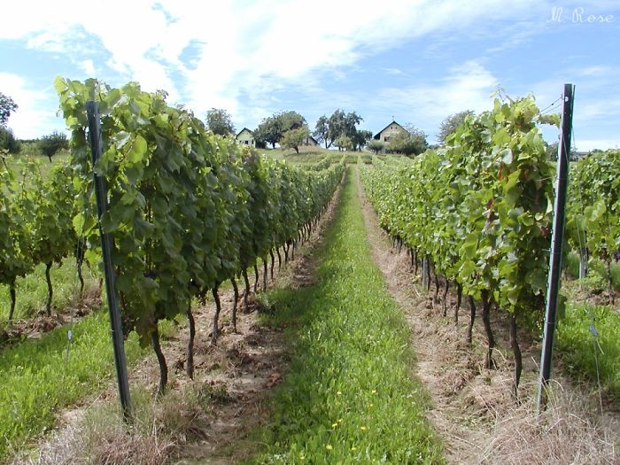 Friendly Home Of Tasty Wines: South Burgenland, Austria
