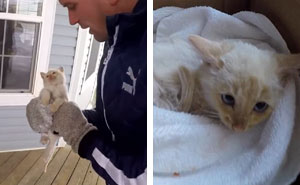 Family 'Resurrects' Frozen Kitten They Found Under The Snow, Names Him 'Lazarus'