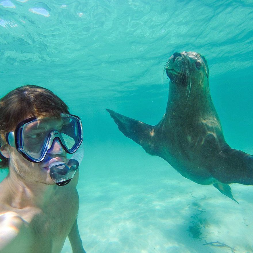 funny-animal-selfies-allan-dixon-10