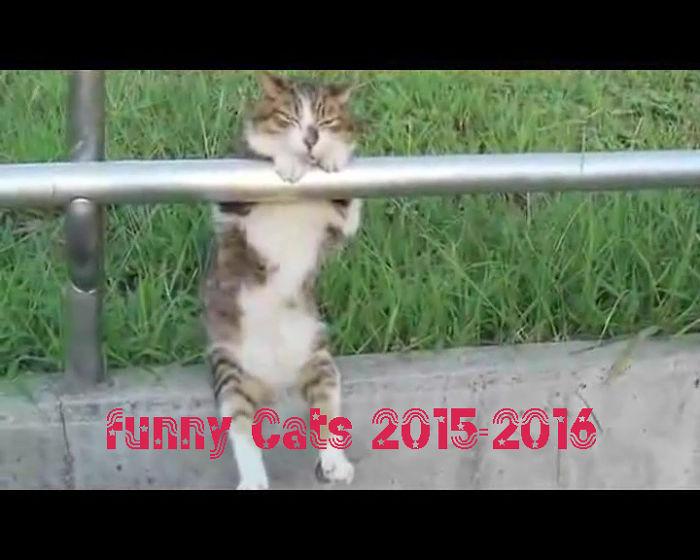 Funny Cats – Funny Cat Videos 2015 [part1]
