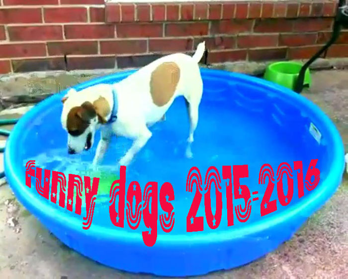Funny Dogs – A Funny Dog Videos Compilation 2015 [part3]