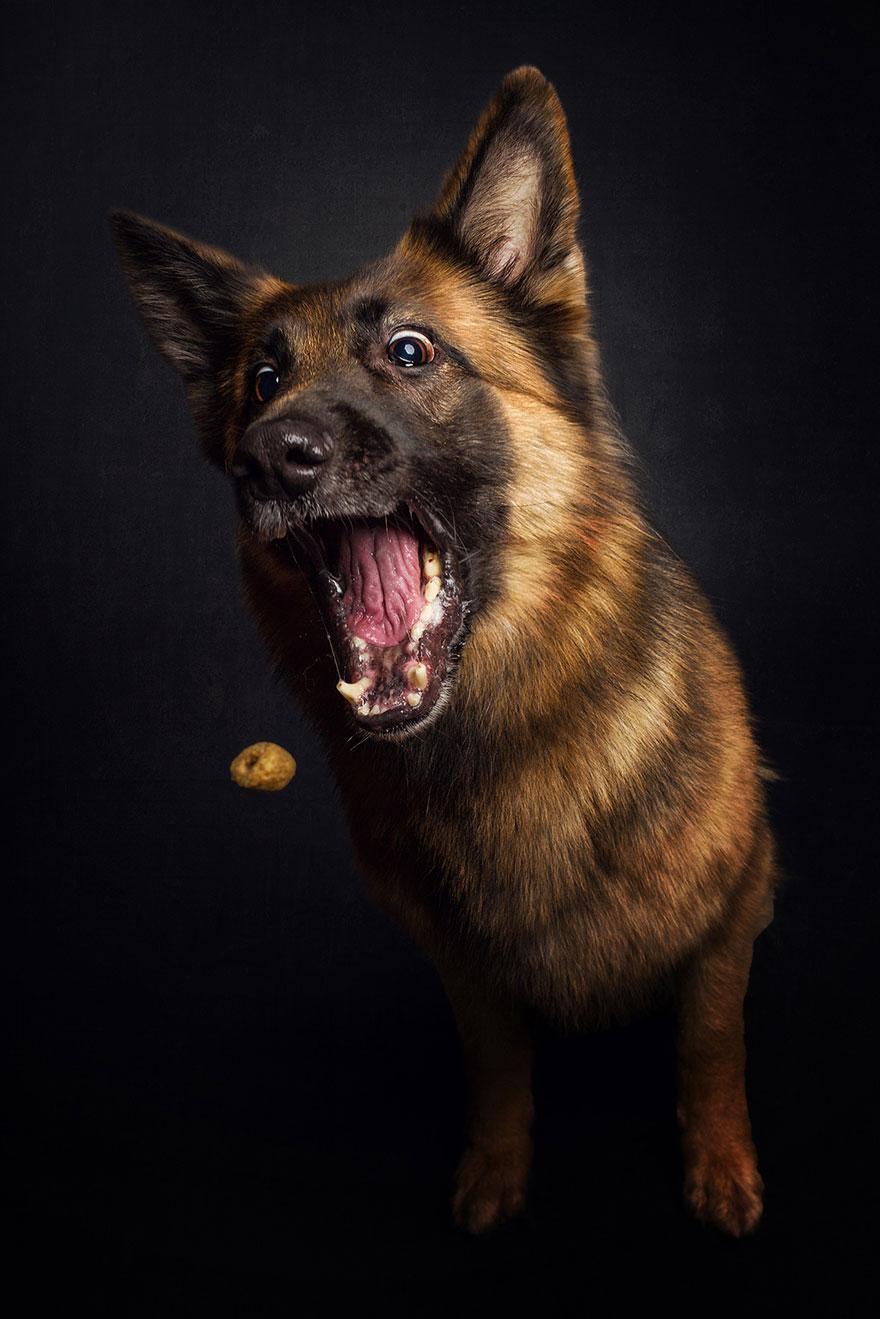 funny-dogs-catching-food-fotos-frei-schnauze-christian-vieler-15
