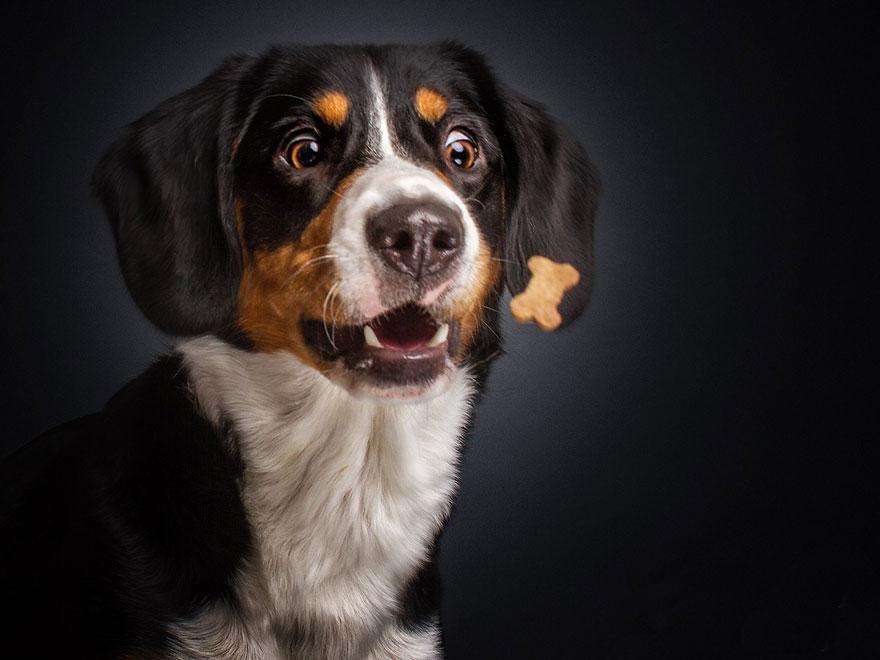 funny-dogs-catching-food-fotos-frei-schnauze-christian-vieler-2