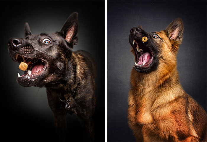Photographer Captures Hungry Dogs' Hilarious Expressions When They Catch Treats