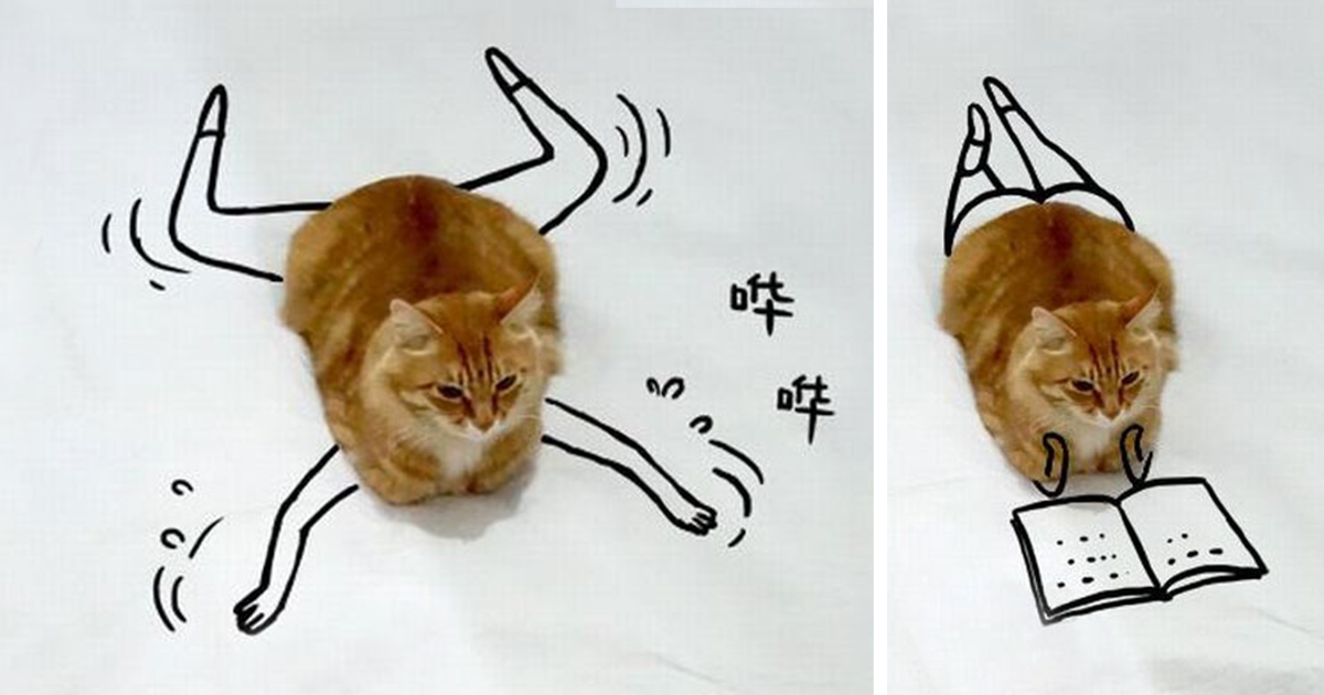 Challenge: Doodle This Cat Photo To Give Him New Adventures (20+ Pics)