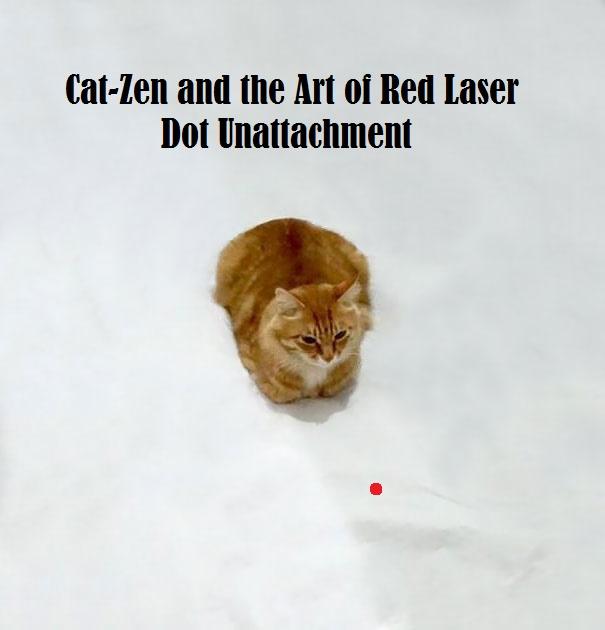 Cat -zen And The Art Of Red Laser Dot Detachment