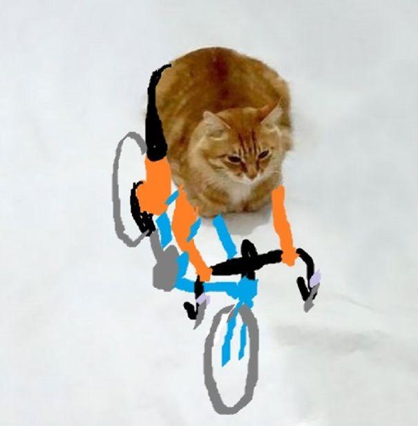 Cat 1 Climber