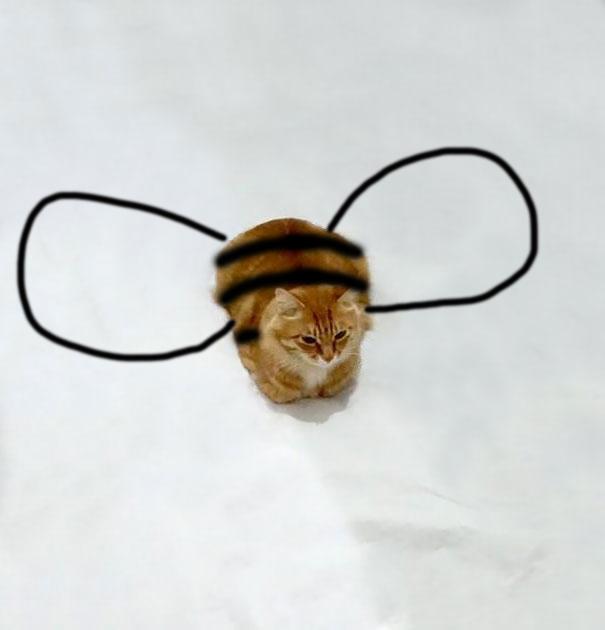 Bumble Kitty.