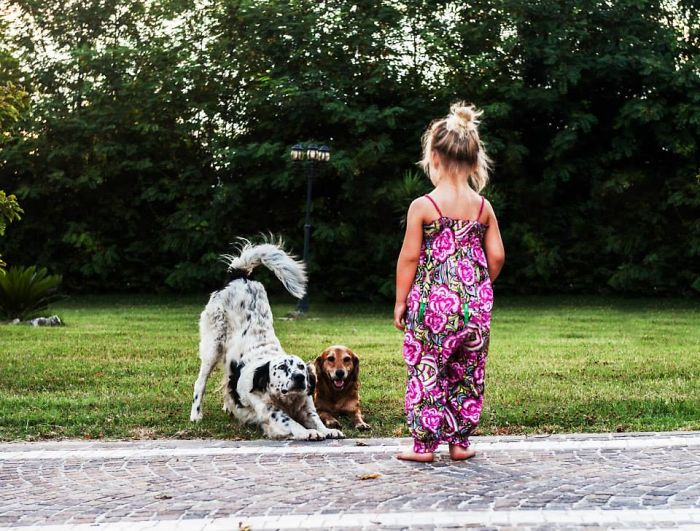 The Little Dog Trainer