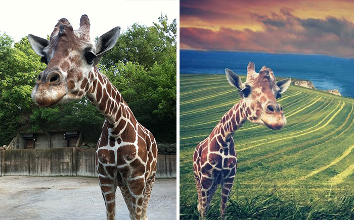 Help This Giraffe Leave The Zoo & Visit Places Around Your Home