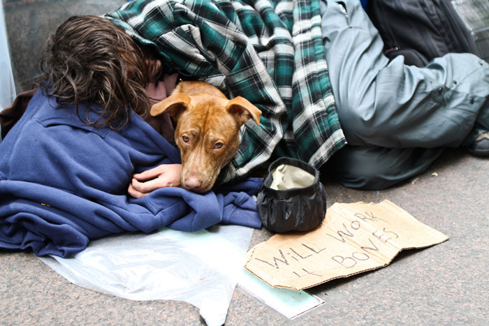 Man And His Dog In Zuccotti Park
