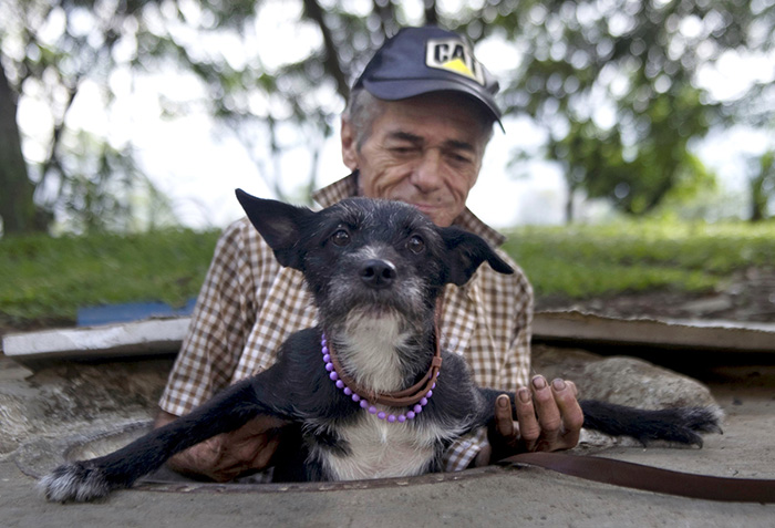 Homeless Man Helps His Dog To Get Out Of The Sewer Where They Live In Medellin, Colombia