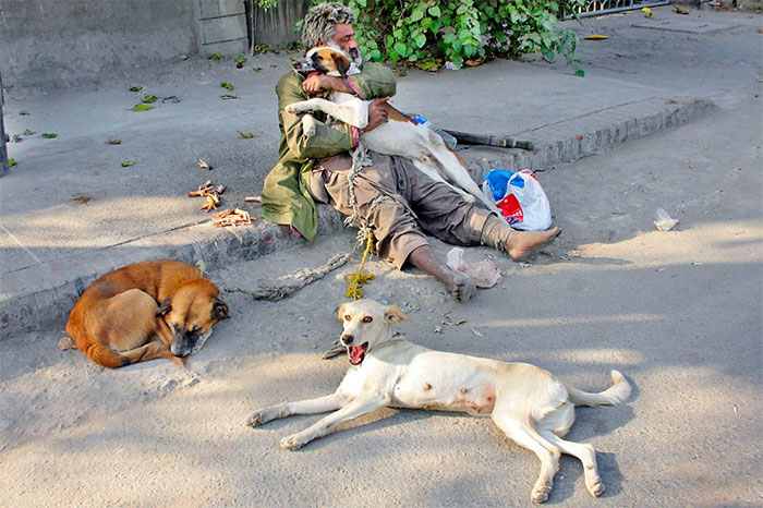 Homeless Man With His 3 Dogs On The Streets Of Lahore