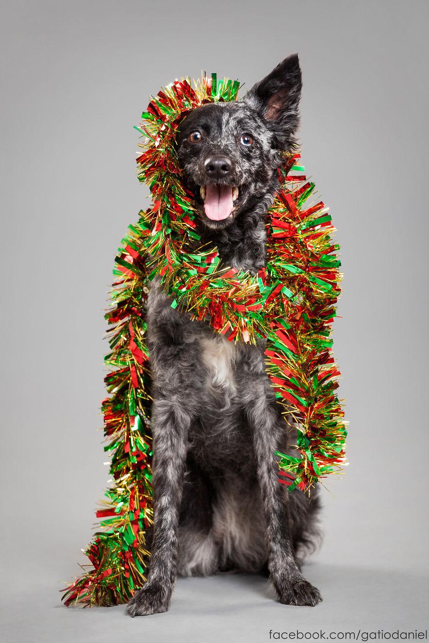 I Took Christmas-Themed Dog Portraits To Wish You Happy